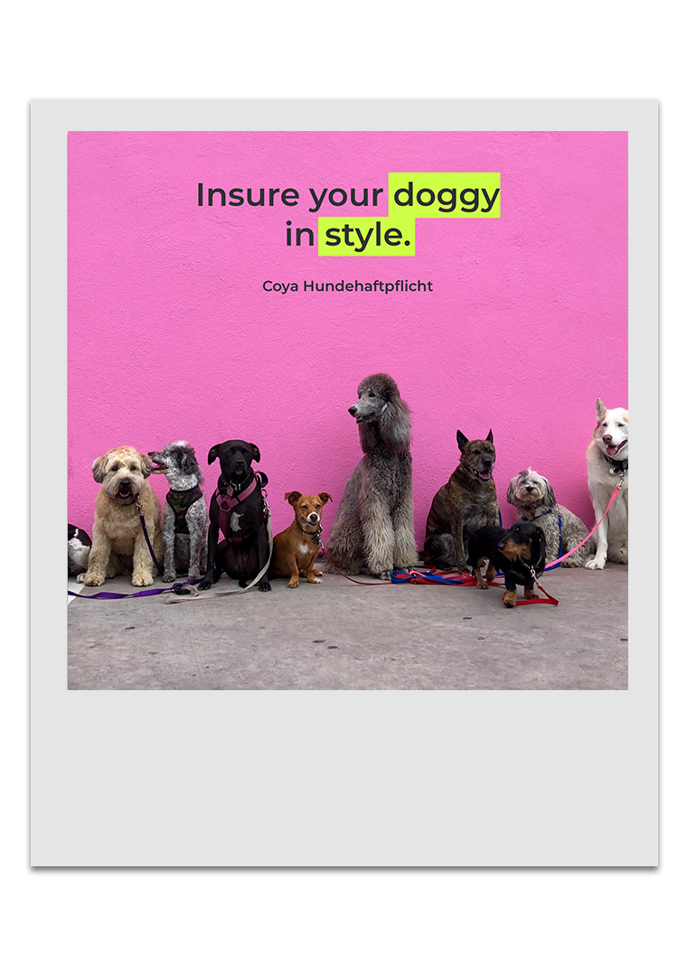 Coya Hundehaftplflicht - Doggy Style