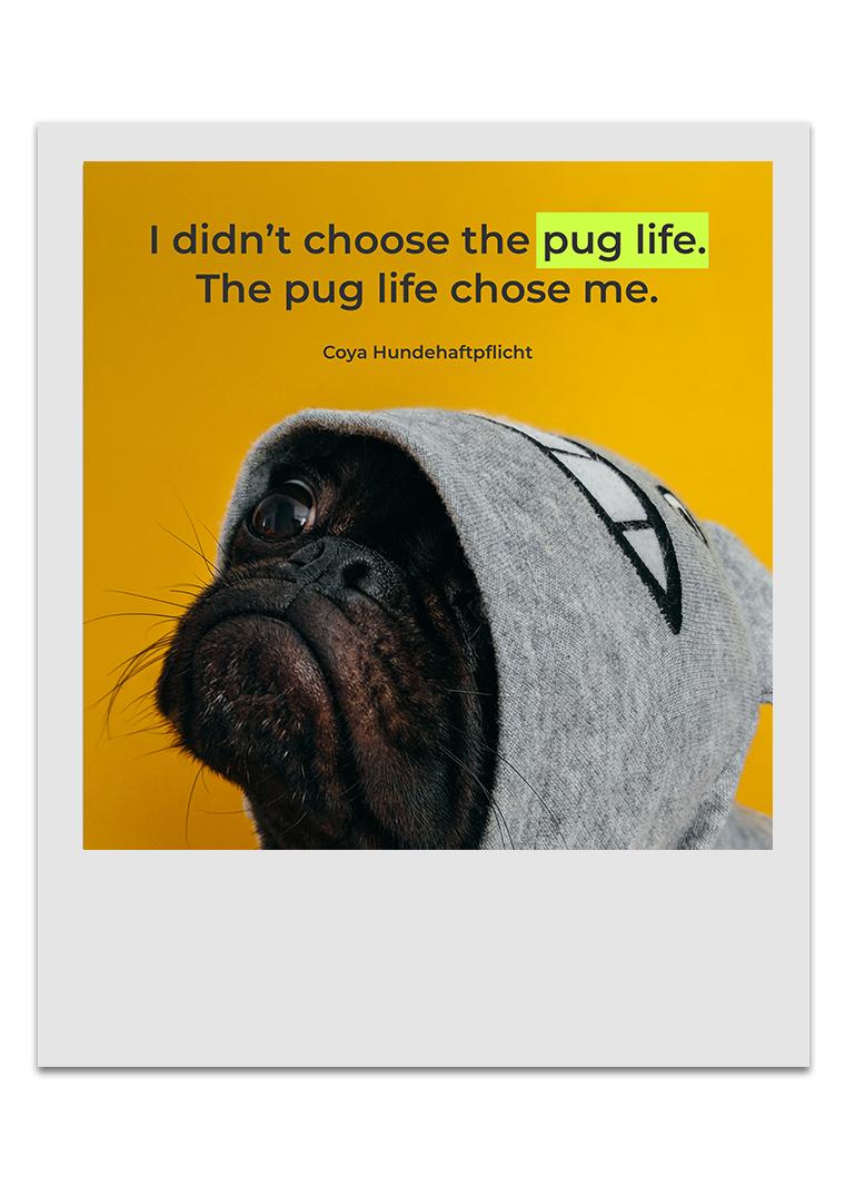 Coya Hundehaftplflicht - The Pug Life